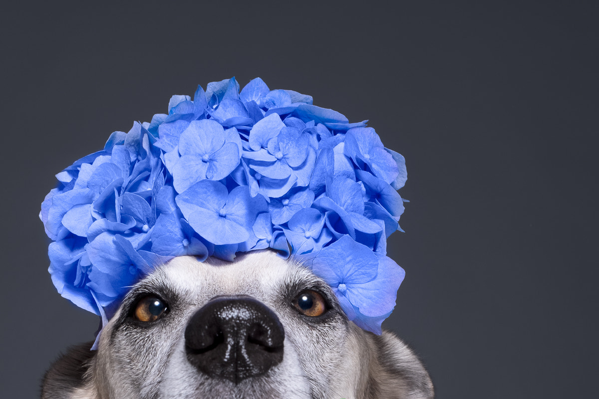The Dog Photographer Breaking 'All the Rules' with Irresistible Fujifilm Work on 500px