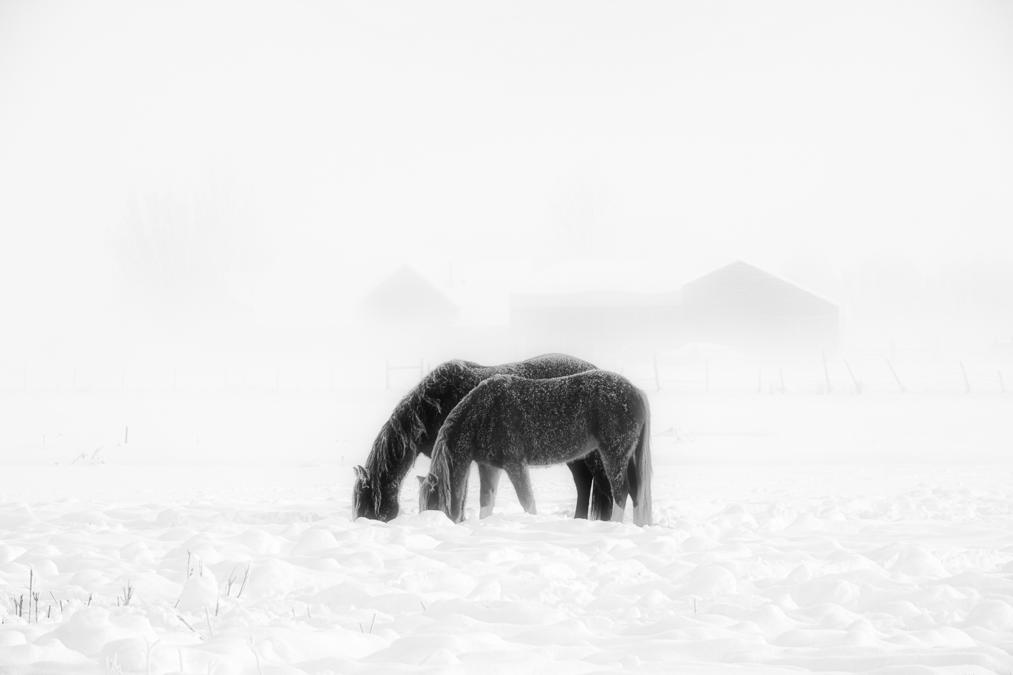 "Fujifilm Magazine ""Winter"" Assignment Winner: Mark Seawell"