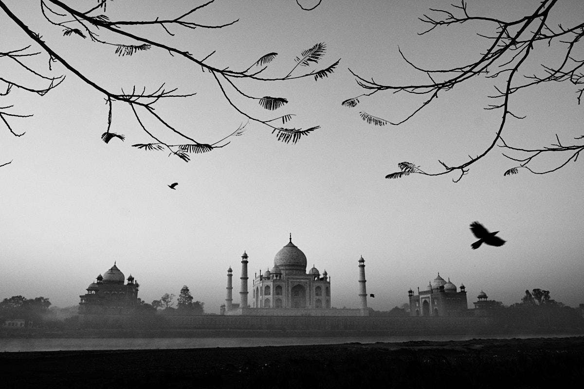 Compose and Wait - Taj Mahal