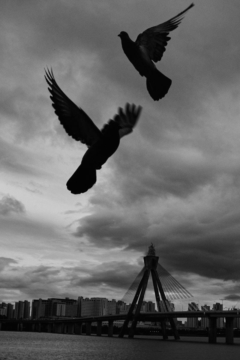 Olympic Bridge - Fujifilm X100F