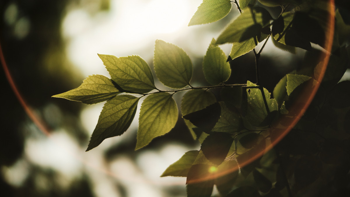 Laowa Argus 33mm f/0.95 Fujifilm